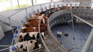 Empty rotary milking facility